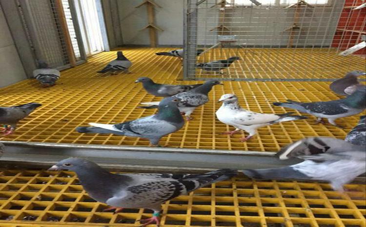 潮州鸽舍专用地板格栅